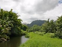 MLS#605767 — Hanalei Real Estate